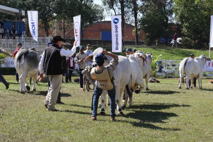 En los últimos 2 años la carne paraguaya duplicó sus mercados