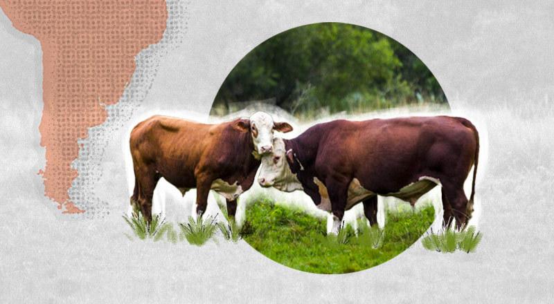 El Argentine Beef en París
