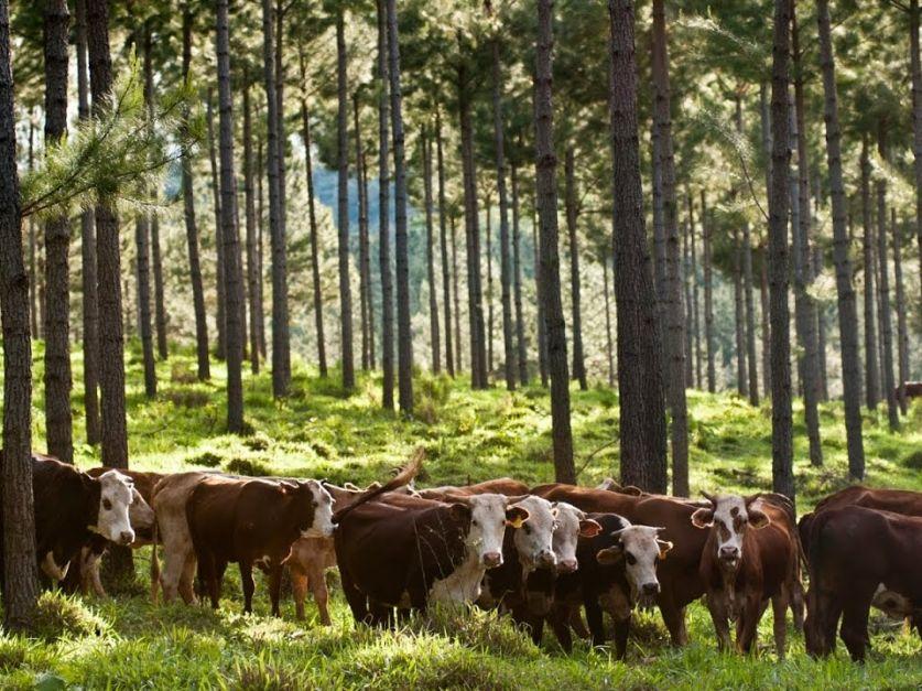"""""""Más temprano que tarde, la ganadería argentina podrá salir a decir nosotros capturamos carbono"""""""