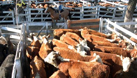 Por qué el campo confía en que las elecciones podrían cambiar la novela de las exportaciones de carne