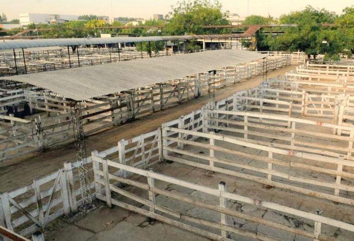 Carne : no hay acuerdos todavía para convocar a un cese de ventas