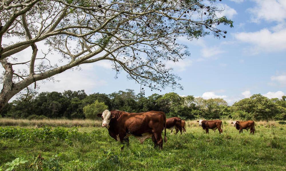 Argentina podría convertirse en líder en la producción de carne libre de deforestación