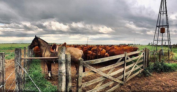 """""""Un modelo de ganadería sustentable no resiste más del 24% de exportaciones"""""""