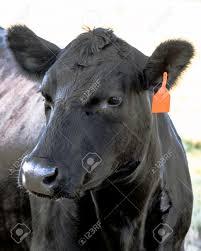 Se tensan los precios de la carne en un contexto de firme demanda externa