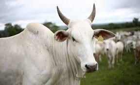 Exportaciones de carne: La potencia brasileña