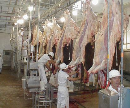 El sector frigorífico advierte el crecimiento de faena en negro