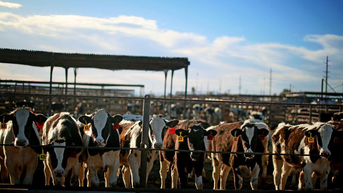 Exportación de carne a China: Argentina ante una gran oportunidad
