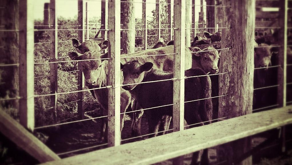 Panorama ganadero: Precios , faena de hembras, producción y exportación.