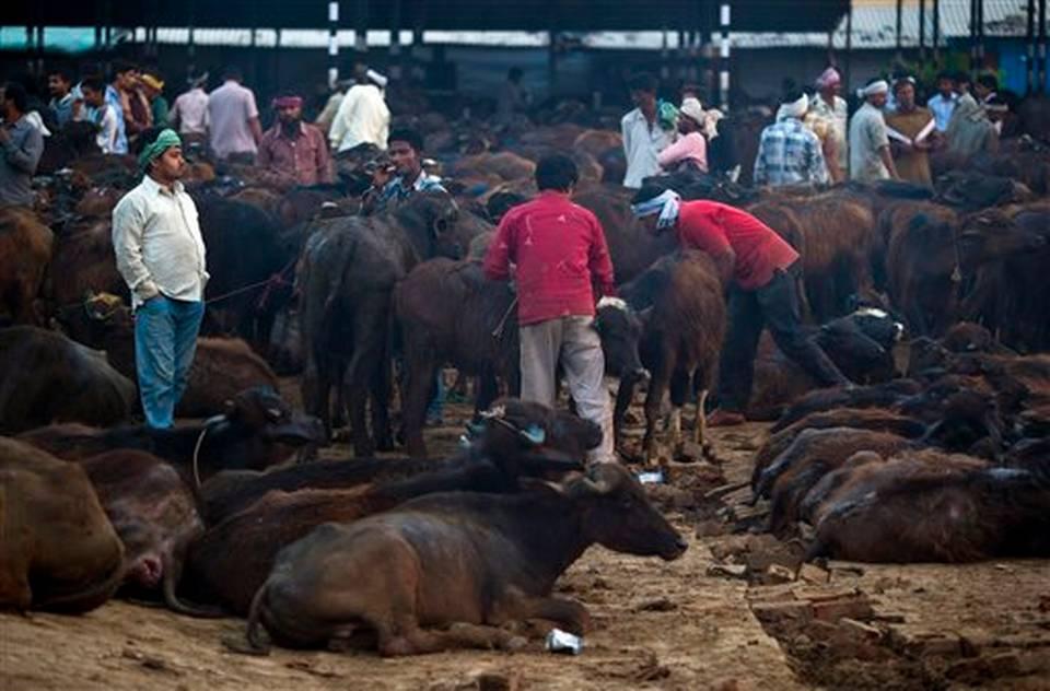 Sube la presión contra la carne de vacuno en India