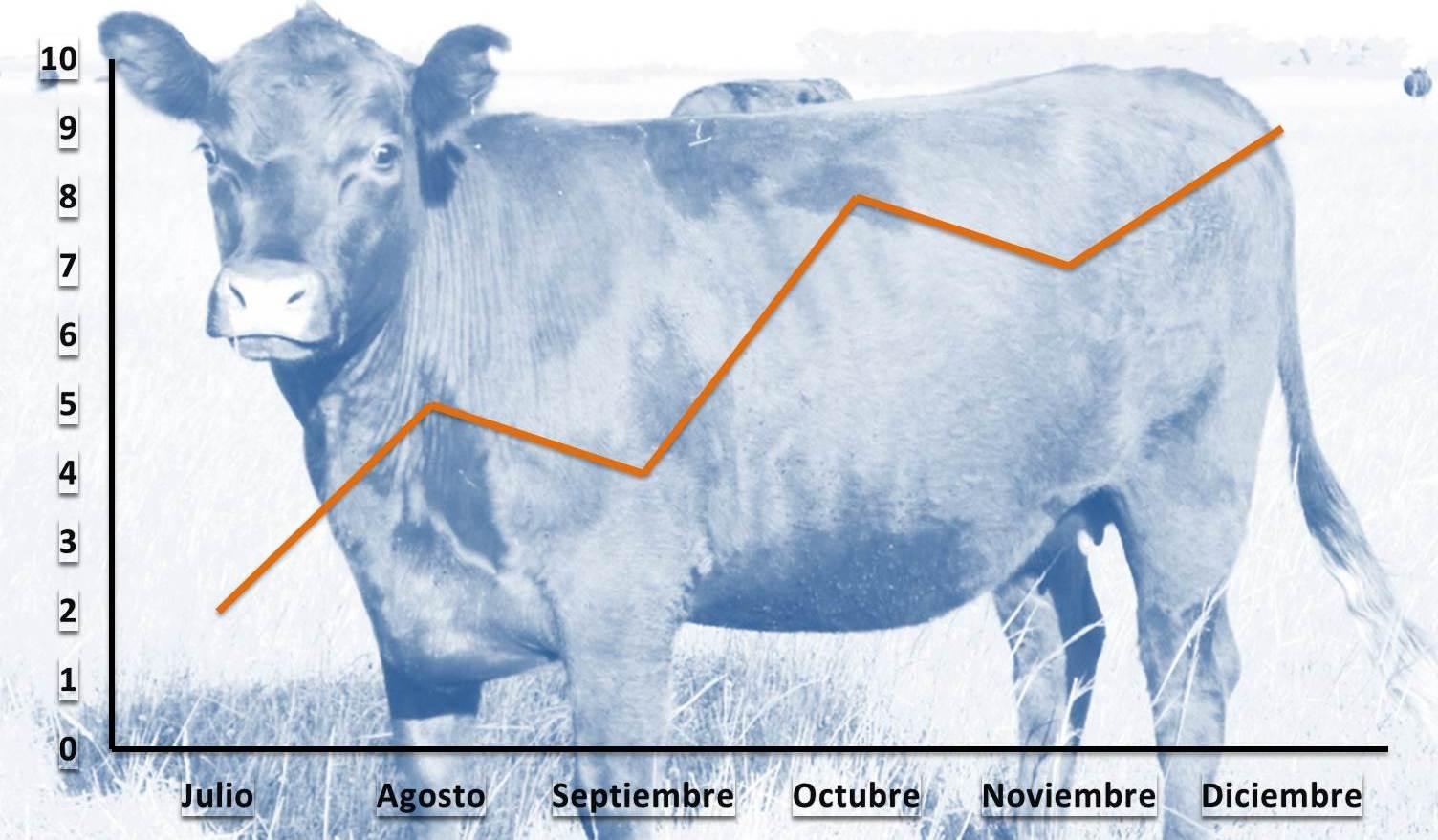 Faena estable con fuerte reducción de vacas.