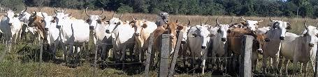 Paraguay celebra números positivos y espera conquistar mercados importantes para sus carnes en el 2021