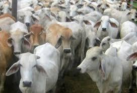 En Paraguay la concentración afecta el precio local de la carne y golpea a sector