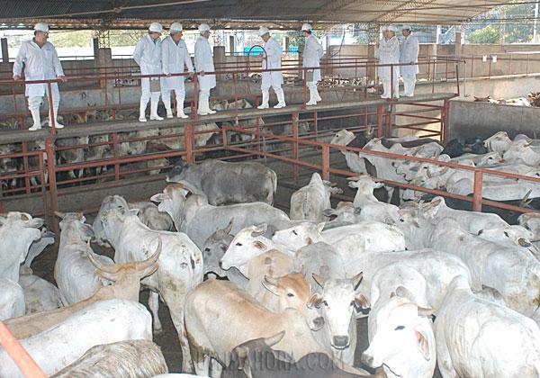 Rusia suspende envíos de carne de tres frigoríficos paraguayos