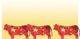 Analizan liberar la venta de carne de vacas de descarte para China