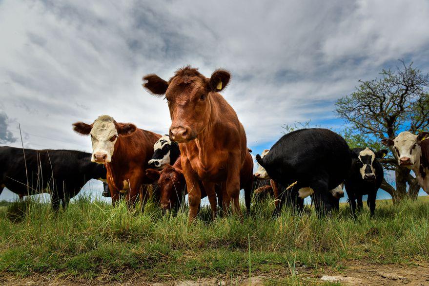 El Gobierno hará cambios en el cepo para exportar carne: los detalles