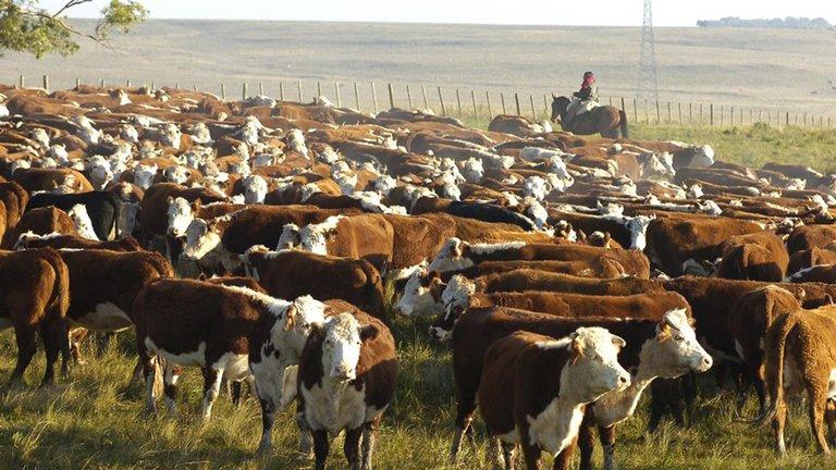 Argentina y Uruguay. Negocios ganaderos diferentes