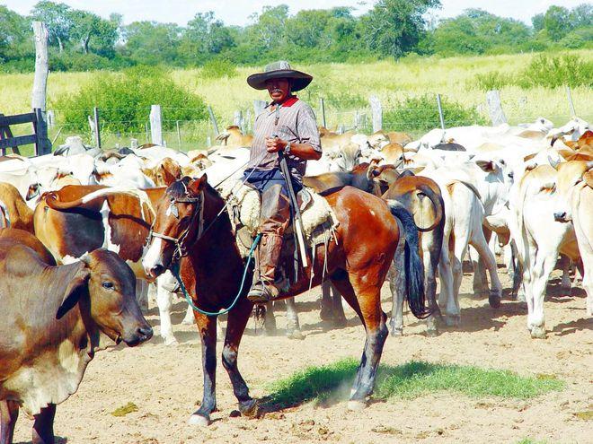 Para Paraguay, Chile y Rusia representan el 57,5% de exportaciones de carne bovina