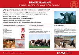 Argentina empieza a aplicar estándares de bienestar animal en su ganadería