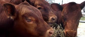 La carne: un problema sin solución