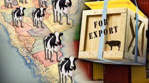 Argentina: Estiman que exportaciones de carne vacuna superarán las 900.000 toneladas en 2020