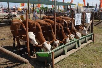 Hay nuevas razas incorporándose a la producción de carne