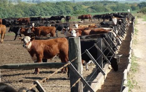 En Uruguay la exportación de carnes se incrementó 9%
