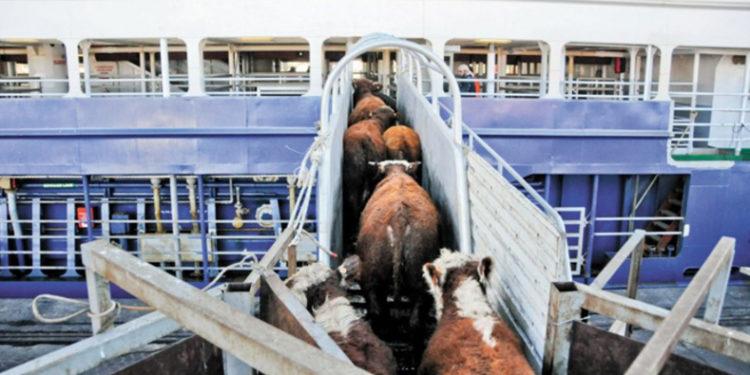 Los chinos son insaciables: Ahora vienen a la Argentina en busca de ganado en pie