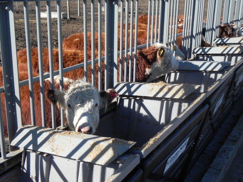 Un camino para llegar a los cortes de carne más valiosos
