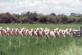 Paraguay también busca aumentar envíos de carne a China