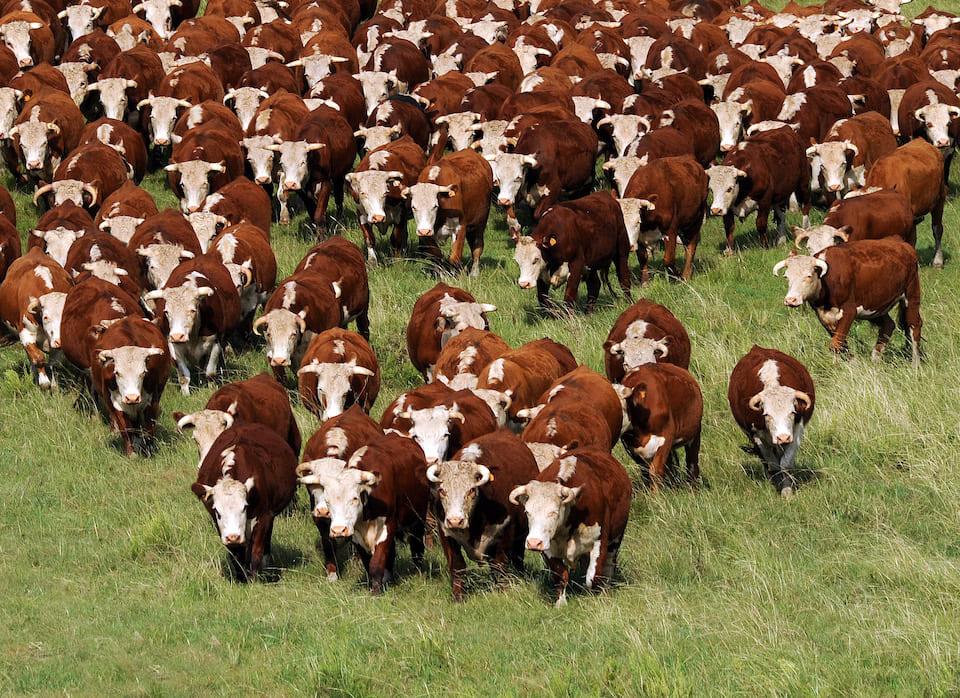 La producción y comercio de carne en tiempos de pandemia