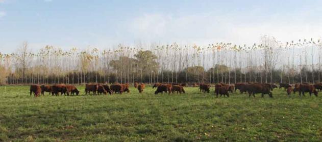 Mercosur ¿Libre de Aftosa sin vacunación?