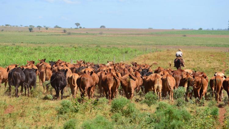 """Los mayores países exportadores reducen sus """"stocks"""" bovinos"""