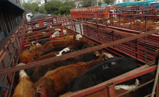 En Uruguay el precio del ganado gordo continúa en plena suba
