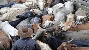 """Brasil confirma dos casos de """"mal de la vaca loca"""" y suspende exportaciones de carne a China"""
