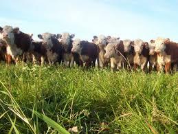 Estrategias: calidad nutricional como elemento para la promoción de la carne vacuna
