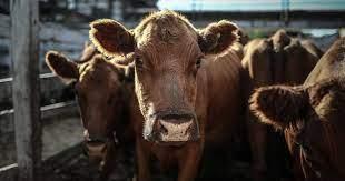 Cepo a la carne: a dos semanas del anuncio no se concretó la liberación parcial